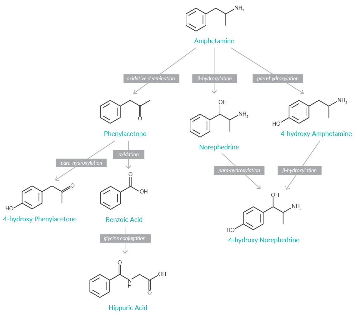 Stimulant Use and Abuse From Past to Present   Cayman Chemical